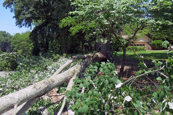 June 7, 2018:  Downed tree in the neighborhood .  .  .
