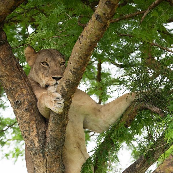 Uganda_T_QE-1367.jpg