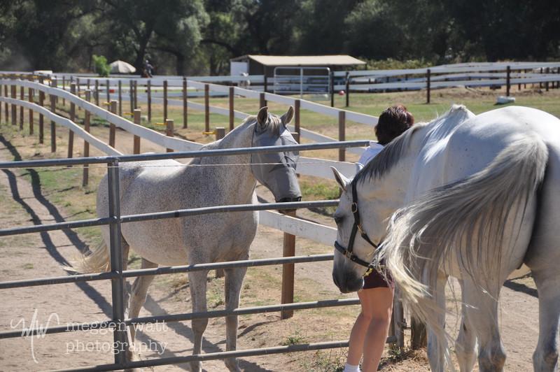 EB&Horses-004.jpg