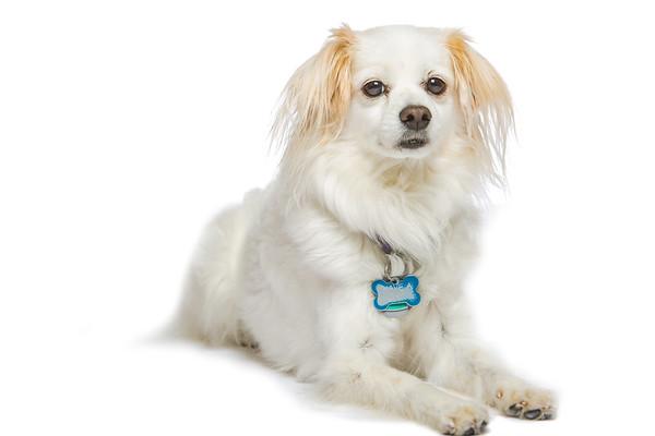 Ventura pups