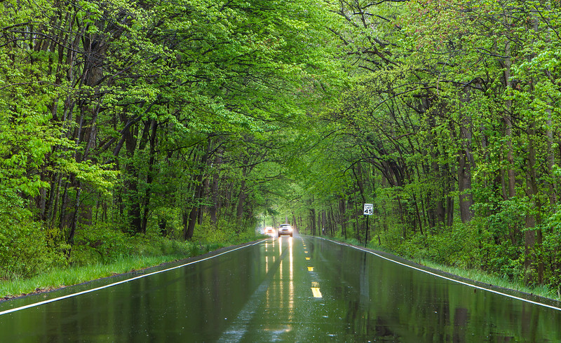 Tunnel of Trees in rain 3a-.jpg