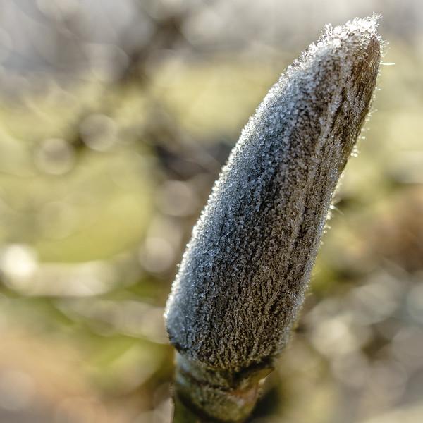 Frost 120715-020.jpg
