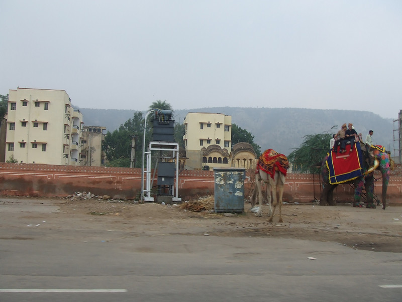 My first camel and elephant sightings on the way to Amber Fort.