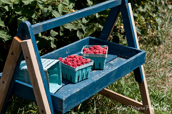 Wegmeyer Farms: Summer Raspberries