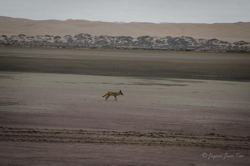 Namibia-5300.jpg