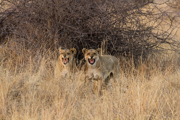Madikwe Game Reserve Aug 2012