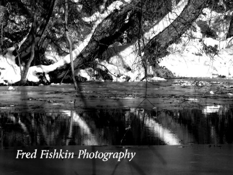 trees reflect bw.jpg