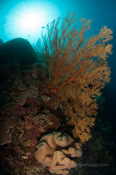 tubbataha-reef-2017-divehappy-chris-mitchell-12.jpg