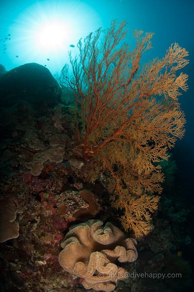 tubbataha-reef-2017-divehappy-chris-mitchell-12.jpg