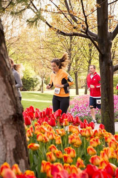 TulipFestHalfMarathon_Runners_Gardens_2015_IMG_5122.jpg
