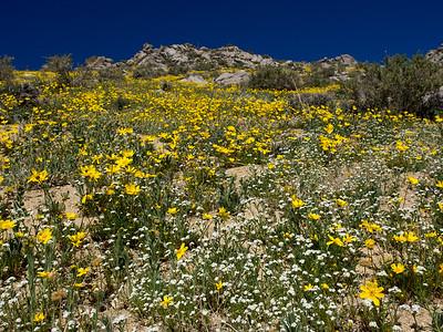 Butterbredt Peak - Southern Sierra  03/13/15