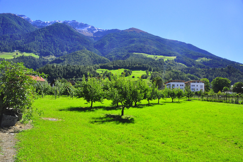 Apple orchards in the Venosta valley