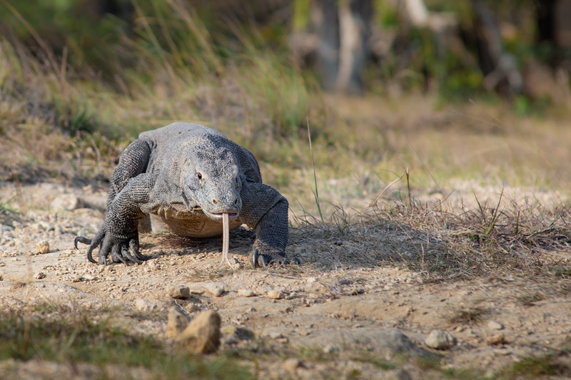 Komodo -June 29, 2019-_54A7863.jpg