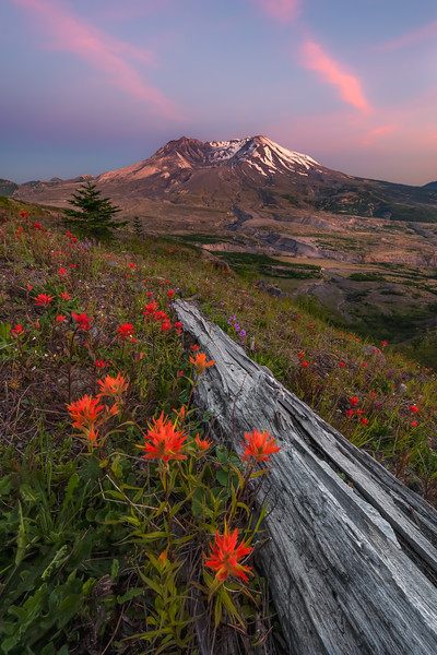 Mt. St. Helens Paintbrush Sunset