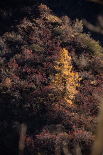 Herbst-im-Rheinwald--26.jpg
