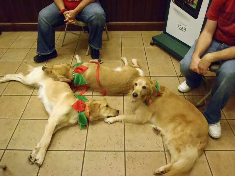 Wrapping for Rescue 040a.jpg