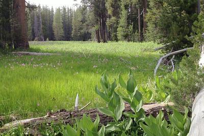 More Yosemite Trips