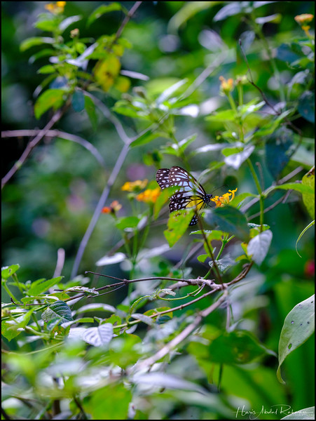200104 KL Butterfly Park 38.jpg