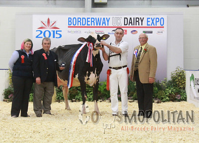 UK Dairy Expo Holsteins 2015