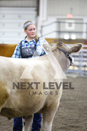 2016 Youth Steer Ring Shots