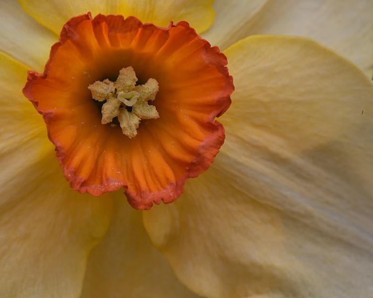 Flowers-12.jpg