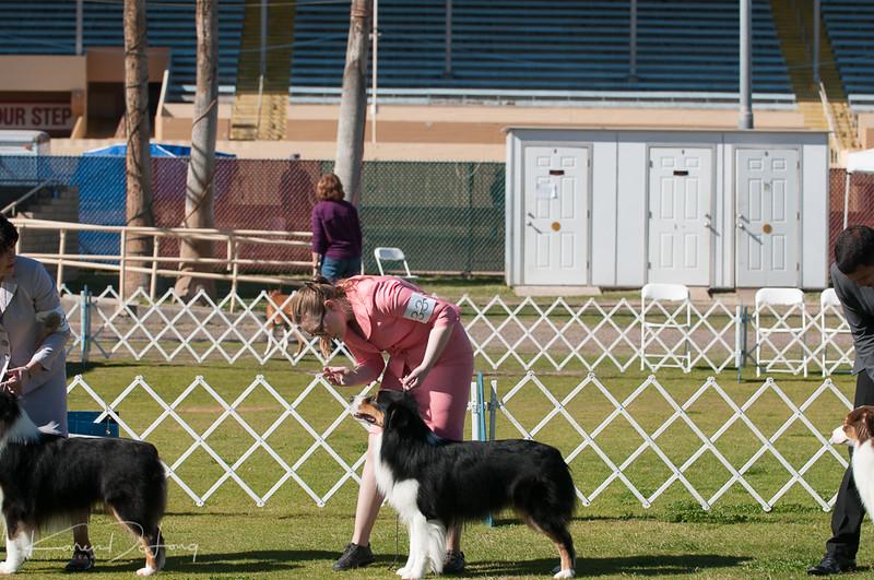 20170205_Australian Shepherds_Lost Dutchman Kennel Club-76.jpg