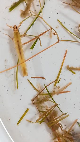 Invertebrate videos