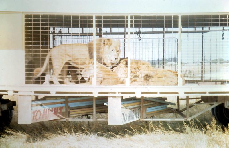 1968-12-1 (13) Circus in Sale.JPG