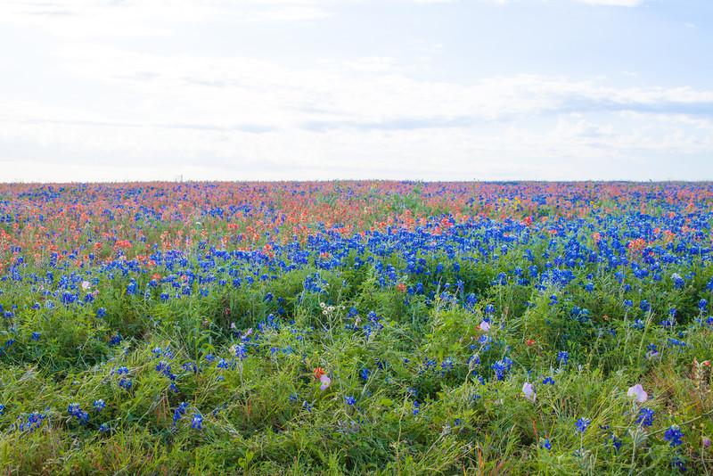 2016_4_9 Texas Wildflower Shoot-8815.jpg