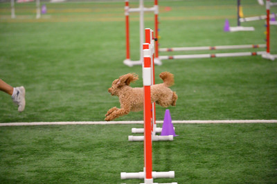 Berks County Dog Training Club AKC Agility Trial September 1-4