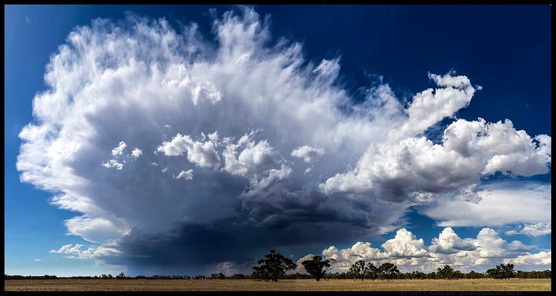smcMoora Storm Pan.jpg