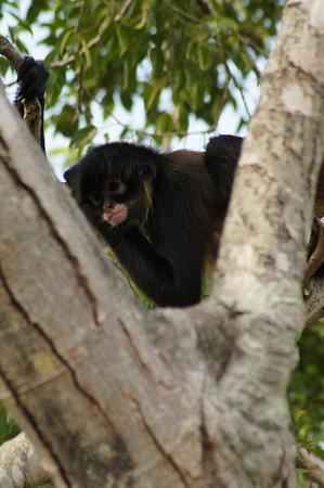 palm beach zoo 9/27/12
