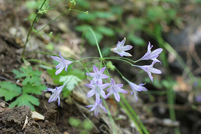 Hiking (Almaden Quicksilver County Park) 06/17/11