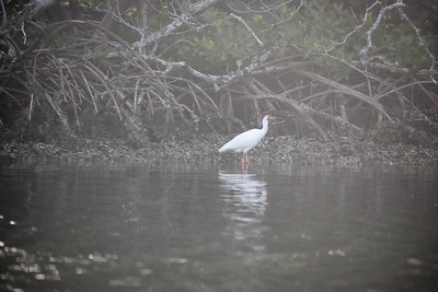 Sunset Bird Rookery Kayak Tour - Agra, Doty, Roger & Benson