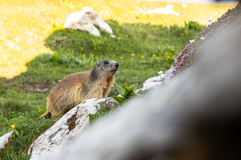 Cufercal-und-SB-Klettern-2019-5647.jpg