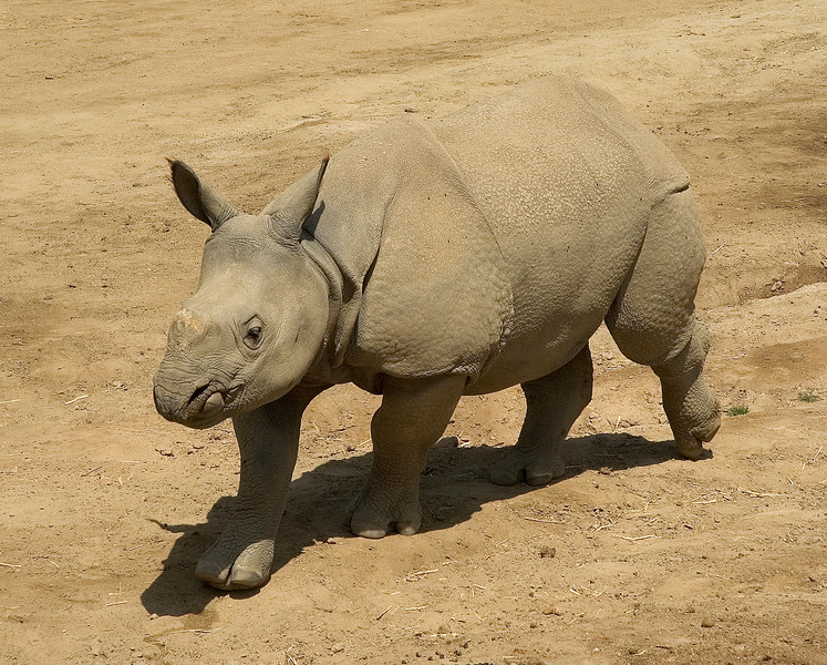 Rhinos-11.jpg