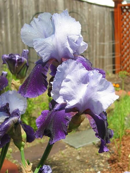 garden-2002-06-0057_std.jpg