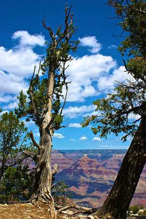 Cypress and South Rim