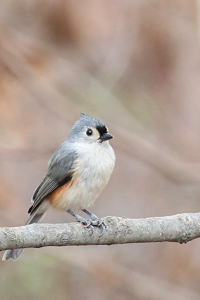 Birds-103.jpg