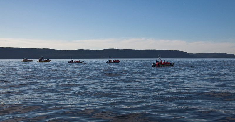2011 quebec whale watching (64 of 80).jpg