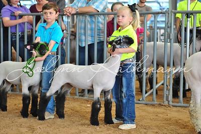 Lamb Showmanship