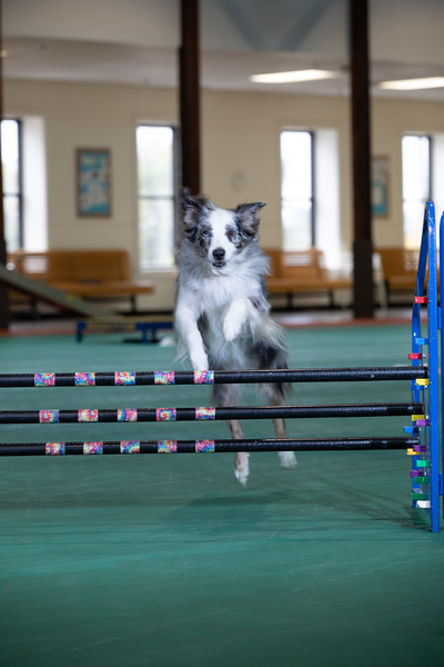 SPCA_Agility-20.jpg