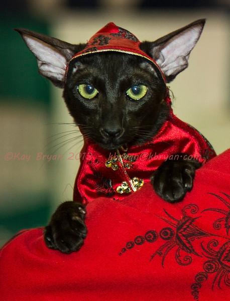 CatShow2014061.JPG