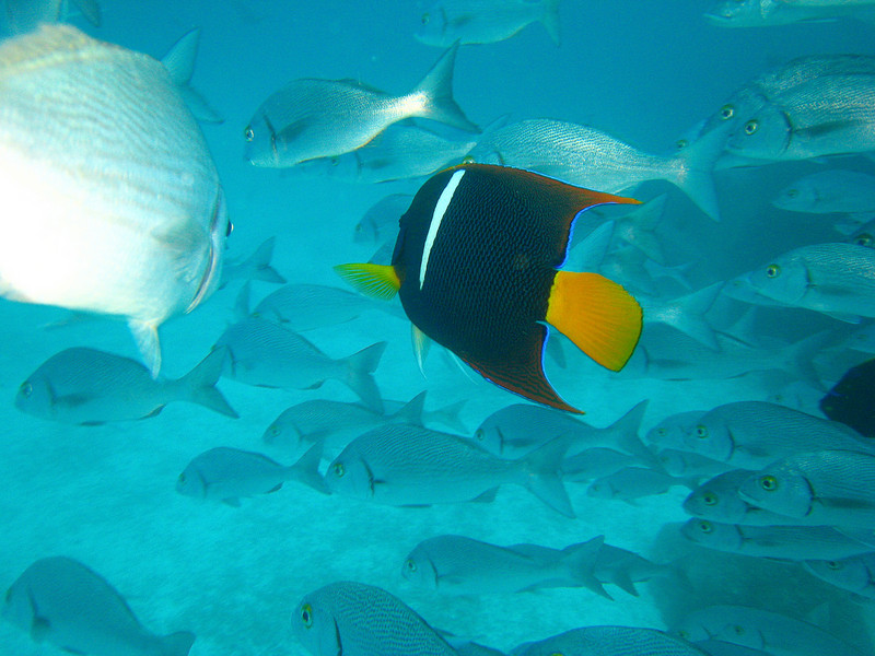 Diving in the Galapagos (173 of 392)