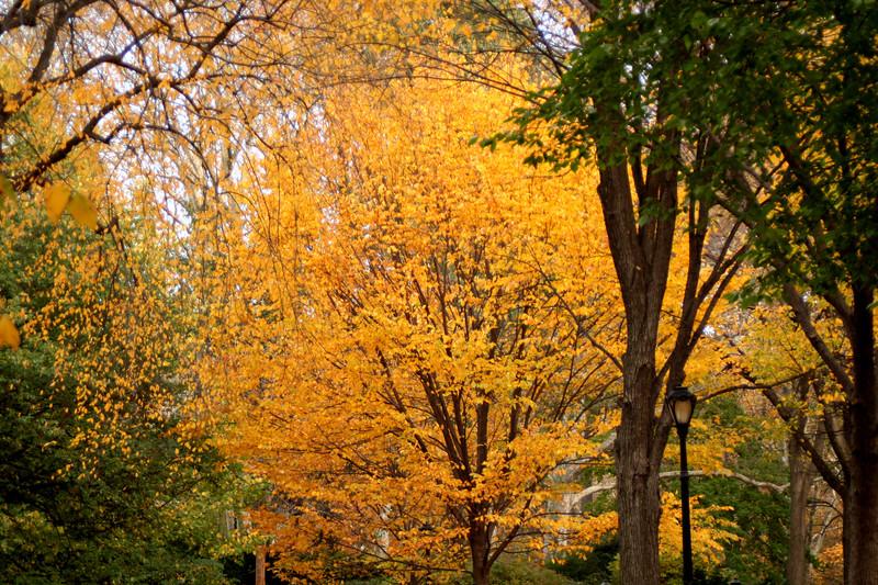 yellowgreentrees2.JPG