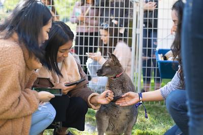SPH Petting Zoo 2018