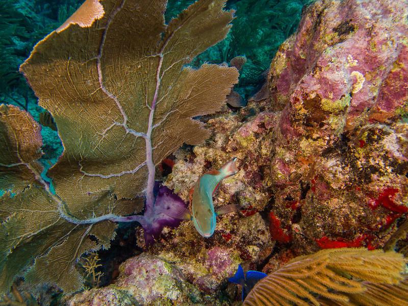 Tulum Trip - Diving 20130405-17-47 _405263104.jpg