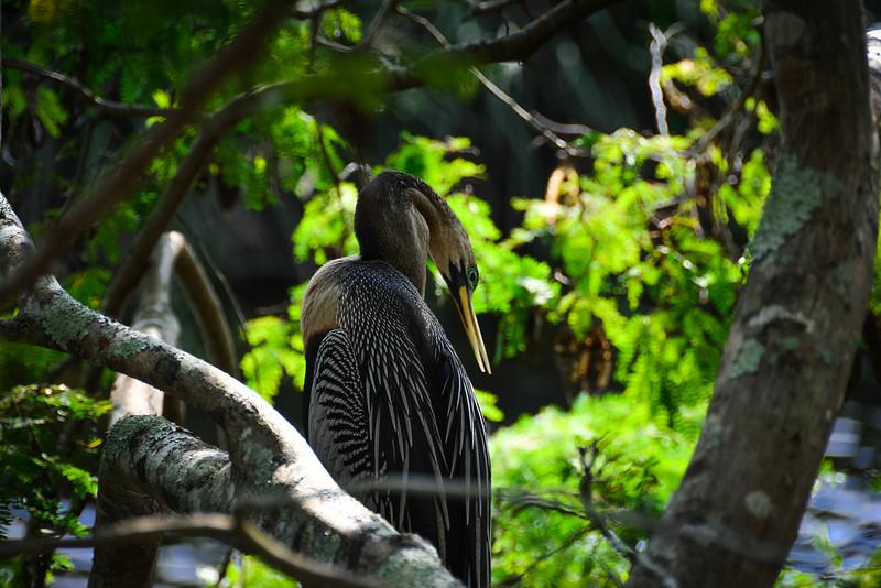 Everglades-31.jpg