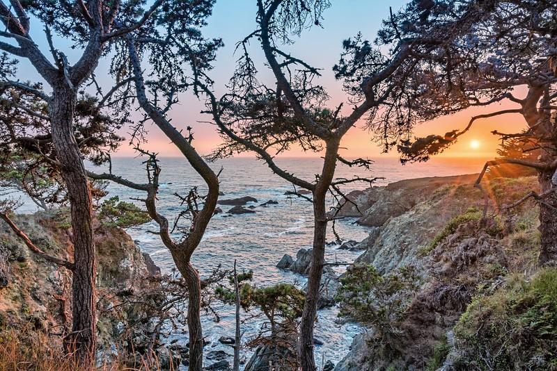Setting Sun through Pines