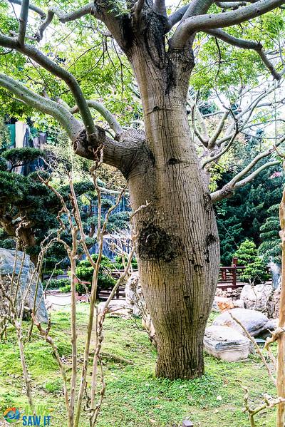Nan-Lian-Garden-00335.jpg